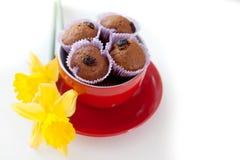 Chocolademuffins met rozijnen in rood die naast de kop liggen Stock Afbeeldingen