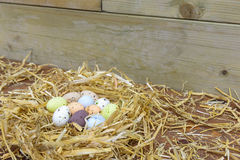 Chocoladepaaseieren in een nest Stock Afbeeldingen