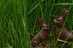 Chocoladepaashazen in groen gras Stock Afbeeldingen