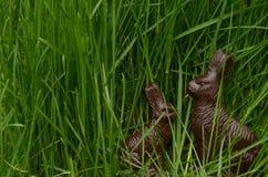 Chocoladepaashazen in groen gras Stock Afbeelding