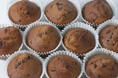 Chocoladeschilfermuffins stock fotografie