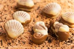 Chocoladeshells seahorse strandzand Stock Afbeelding