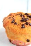Chocolat Chip Muffin Photos stock