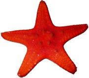 Chocolat orange Chip Starfish Isolated images stock