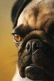 Chocolat-yeux Photo libre de droits