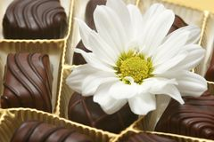 Chocolate Imagens de Stock Royalty Free