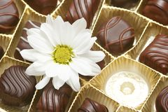 Free Chocolate Stock Images - 5096054