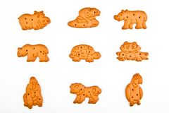 Chocolate baby cookies animals studio quality. Light white background Stock Photography