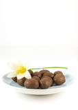 Chocolate ball with white flower Royalty Free Stock Photo