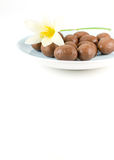 Chocolate ball with white flower Royalty Free Stock Photos