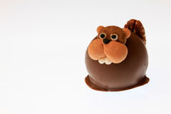 Chocolate Beaver stock photo