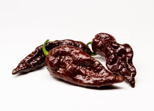 Chocolate Bhut Jolokia Ghost Peppers Royalty Free Stock Images