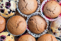 Chocolate and Blueberry Muffins Stock Image