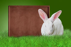 Chocolate board and white bunny. On grass on green background Royalty Free Stock Photography
