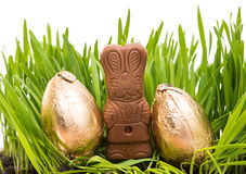Chocolate bunny in the grass with easter eggs Stock Photo