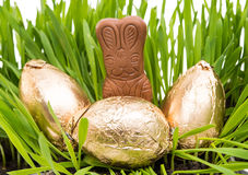 Chocolate bunny in the grass with easter eggs Royalty Free Stock Images
