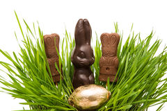 Chocolate bunny in the grass Stock Images