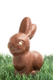 Chocolate bunny rabbit sitting on grass Royalty Free Stock Image