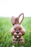 Chocolate bunny sitting in the grass Royalty Free Stock Photos