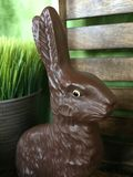 Chocolate Bunny Stock Image