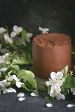 Chocolate cake with apple trees flowers on a dark background, Selective focus Stock Photography