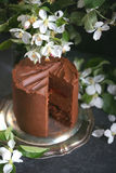 Chocolate cake with apple trees flowers on a dark background, Selective focus Royalty Free Stock Photo