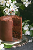 Chocolate cake with apple trees flowers on a dark background, Selective focus Royalty Free Stock Images