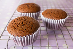 Chocolate cake on sieve. Stock Photography