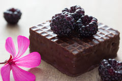 Chocolate cake wiht blackberry Stock Images