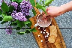 Chocolate caliente con las melcochas y las galletas de mantequilla selladas hechas en casa al lado de la lila Fotos de archivo