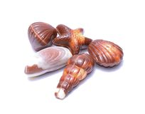 Chocolate candies isolated on white background Royalty Free Stock Photos