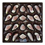 Chocolate candies, seashell and seahorse truffles, artisanal confections in a box Stock Images