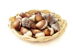 Chocolate candy shaped sea shells stock image
