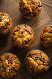 Chocolate caseiro Chip Muffins foto de stock royalty free