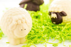 Chocolate cheep Stock Images