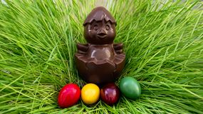 Chocolate chicken sitting on a nest of grass with colorful eggs Stock Photos