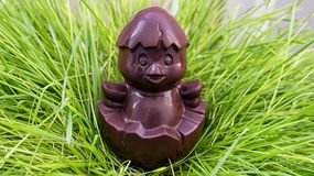 Chocolate chicken sitting on a nest of grass Royalty Free Stock Photography