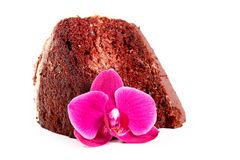 Chocolate chiffon cake Royalty Free Stock Image
