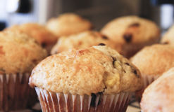 Chocolate chip or blueberry muffins Royalty Free Stock Image