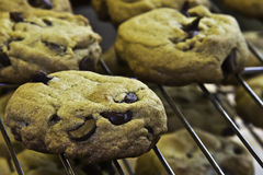 Free Chocolate Chip Cookies Stock Photos - 28325543