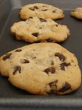 Chocolate chip cookies. Fresh baked chocolate chip cookies on baking sheet Stock Images