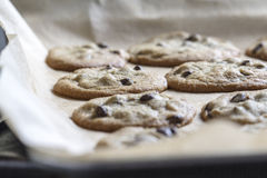 Chocolate Chip Cookies Imagem de Stock
