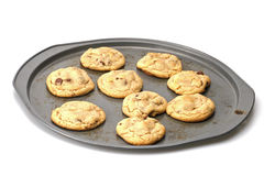Chocolate Chip Cookies. Home made chocolate chip cookies hot on the pan royalty free stock photography