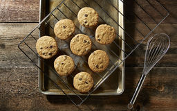 Chocolate Chip Cookies From the Oven. Chocolate Chip Cookies on wire rack Royalty Free Stock Photography
