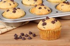 Chocolate Chip Muffin Stock Image