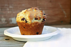 Chocolate Chip Muffin. Large chocolate chip muffin on plate Royalty Free Stock Photos