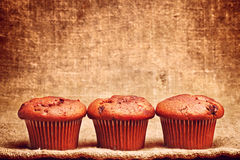 Chocolate Chip Muffin Stock Images