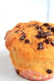 Chocolate Chip Muffin. Isolated on white Stock Photos