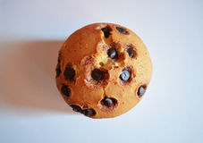 Chocolate chip Muffin. A tasty muffin with chocolate chips Stock Photography