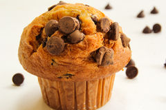 Chocolate chip muffin on white background Stock Images
